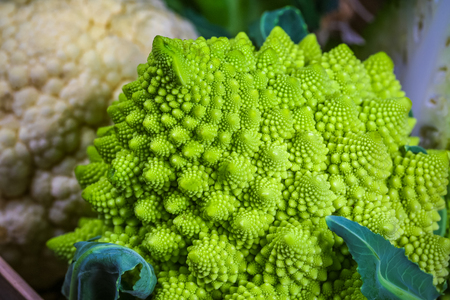 Romanesco broccoli close up. The fractal vegetable is known for its connection to the fibonacci sequence and the golden ratio. Fun food for any practical scientists that loves mathematics.