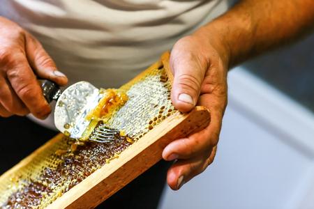 Nahaufnahme Imker, der Wabe mit spezieller Imkereigabel abdeckt. Roher Honig wird aus Bienenstöcken geerntet. Imkerkonzept. Standard-Bild