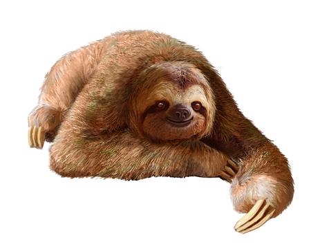 oso perezoso: Perezoso feliz descansando sobre un fondo blanco limpio