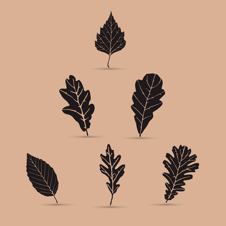 black and white leaf: Set of leafs, silhouettes Illustration