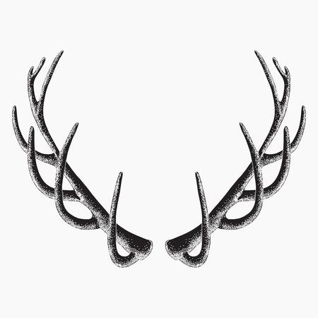 venado: cuernos de ciervo, aislado, ilustración vectorial Vectores