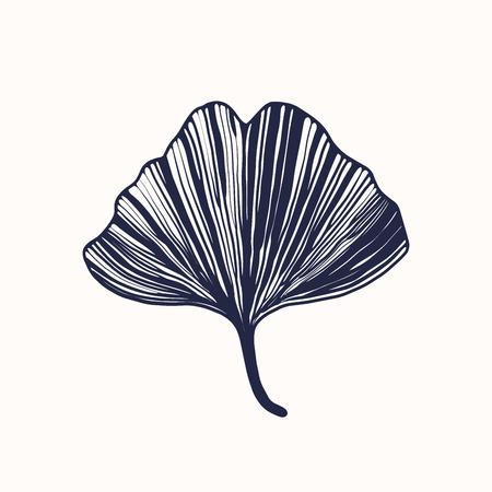 Ginkgo biloba blad, vector illustratie