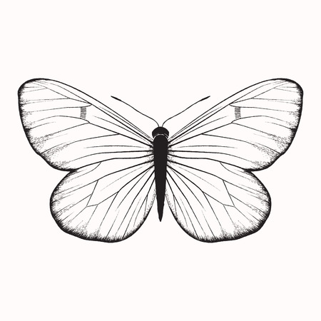 butterfly isolated: Hand drawn vector butterfly, isolated on white