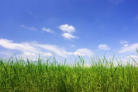 Background of sky and grass Stock Photo - 3512102