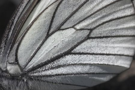 squama: background - butterfly wing Stock Photo