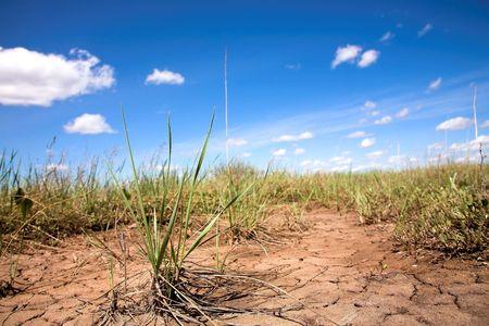 Sandy soil: una planta seca en el suelo arenoso