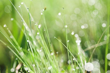 close up photo of green leaves with small  drops photo