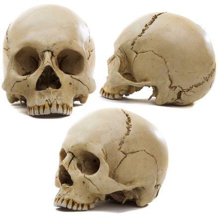 Homo sapience cranium isolated on white background Stock Photo - 3519760
