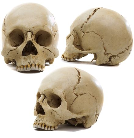 Homo sapience cranium isolated on white background photo