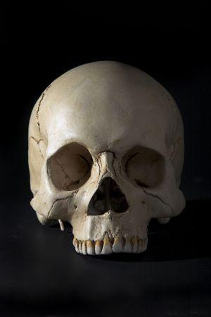 cranium: Homo sapience cranium isolated on black background Stock Photo