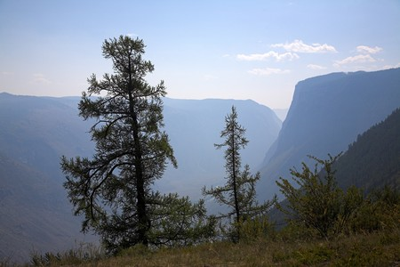 Pair of trees growing on the precipice photo