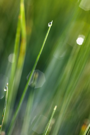 green grass leaves with small shining drops photo