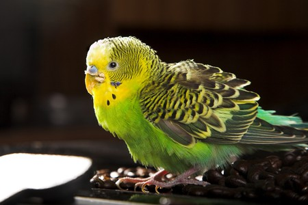close up photo of parrot on dark background photo