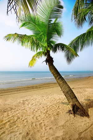 Tropical paradise - coconut palm tree on the sunny bay photo