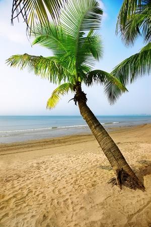 Tropical paradise - coconut palm tree on the sunny bay photo