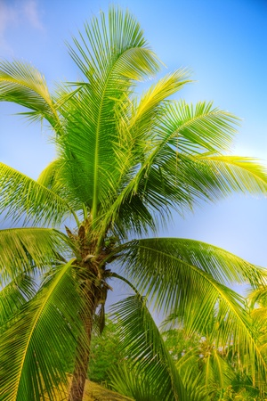 foreshortening: palm tree on the blue sky background Stock Photo