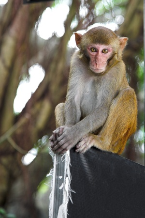 cute macaque sitting on the forest background photo