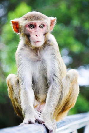 cute macaque sitting on green forest background Stock Photo