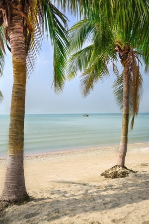 Two coconut palms on the sandy beach photo