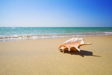 nice sea shell on the sandy beach photo