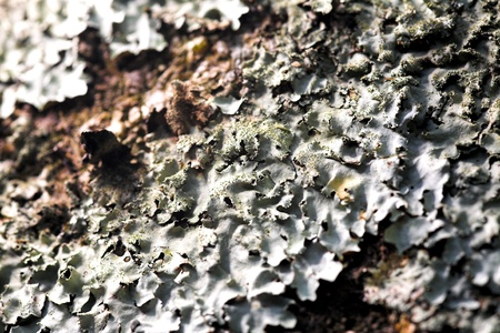 close up photo of the lichen texture photo