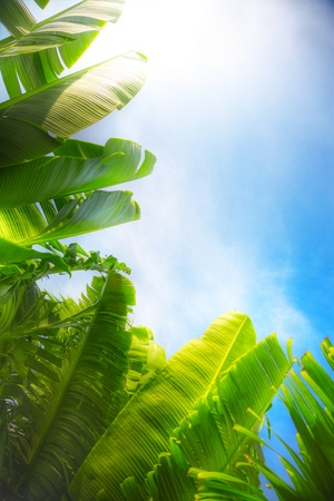 big green leaves on blue sky background photo