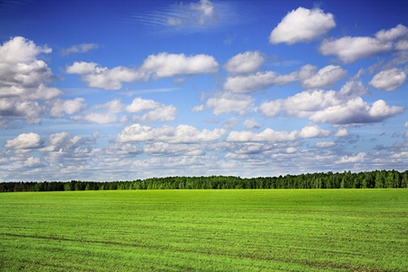 barley agricultural field and cloudy blue sky photo