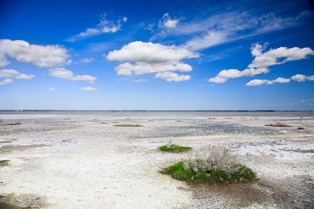salinity: bank of salt lake with dead salinity plant Stock Photo