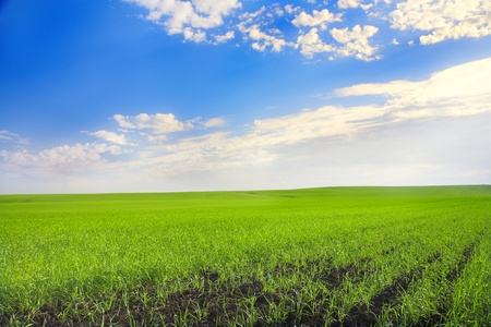 landscape with agricultural field and blue sky photo