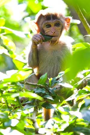 little monkey in the greem tropical forest Stock Photo - 9085952