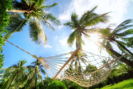 Hammock hanging between tall palm trees in a tropical park Stok Fotoğraf
