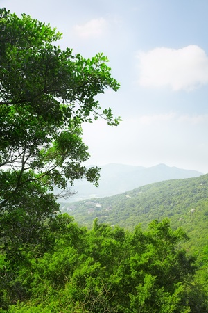 green rainforest on the hill of Asia Stock Photo - 9347158