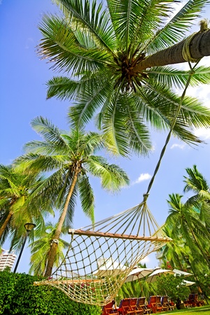 Hammock hanging between tall palm trees in a tropical park Stock Photo - 9347157