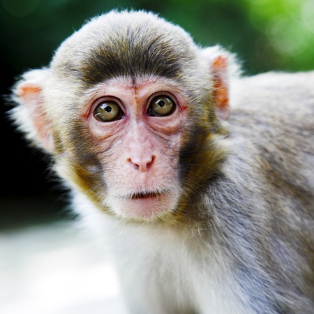 cute macaque sitting on green forest background photo