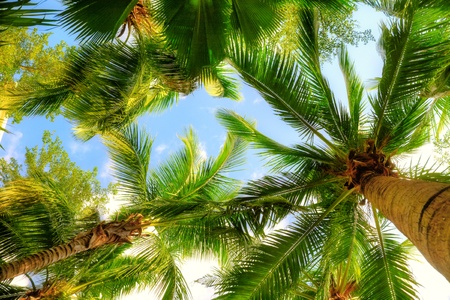 low perspective: palm trees on blue sky and white clouds