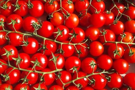 moltitudine: moltitudine di pomodorini a vite
