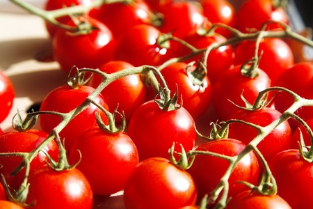 multitude: multitude of cherry tomatoes at the vine