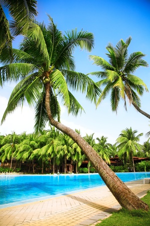 swimming pool with coconut trees and blue sky