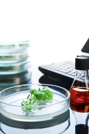 tobacco plants in Petri dish on the laboratory table photo