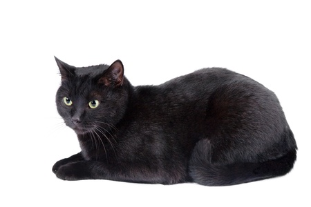 cat tail: black cat isolated on the white background Stock Photo
