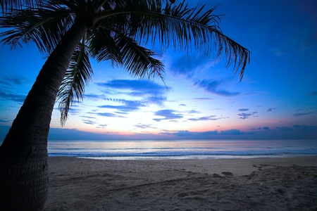tropical sunset with palm tree and cloudy sky Stock Photo - 11742118