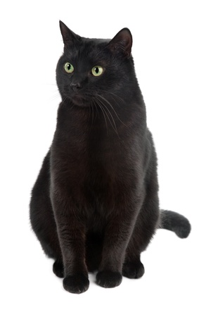 black cat isolated on the white background Stock Photo