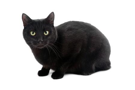 moggi: black cat isolated on the white background Stock Photo