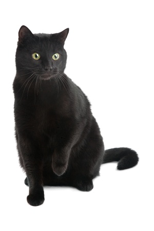 black cat isolated on the white background 스톡 콘텐츠
