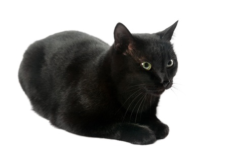 moggi: black cat isolated on the white background Stock Photo