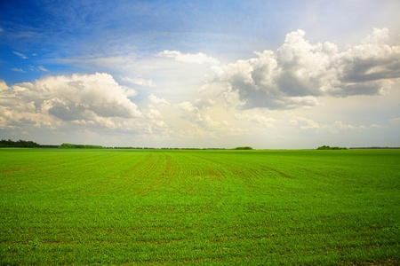 green agricultural field under cloudy blue sky photo