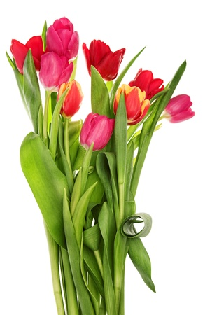 bouquet of tulip flowers isolated on white Stock Photo - 13382077