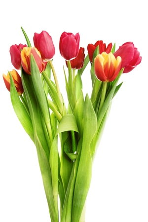 bouquet of tulip flowers isolated on white photo