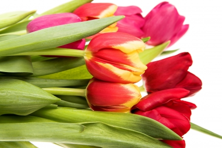 bouquet of tulip flowers isolated on white Stock Photo - 13832840