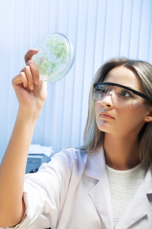 female researcher look at transgenic plant photo
